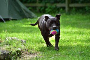 Little Oak Camping- Dog Playing