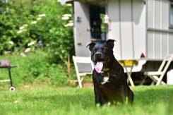Little Oak Camping- Dog & Glamping Caravan